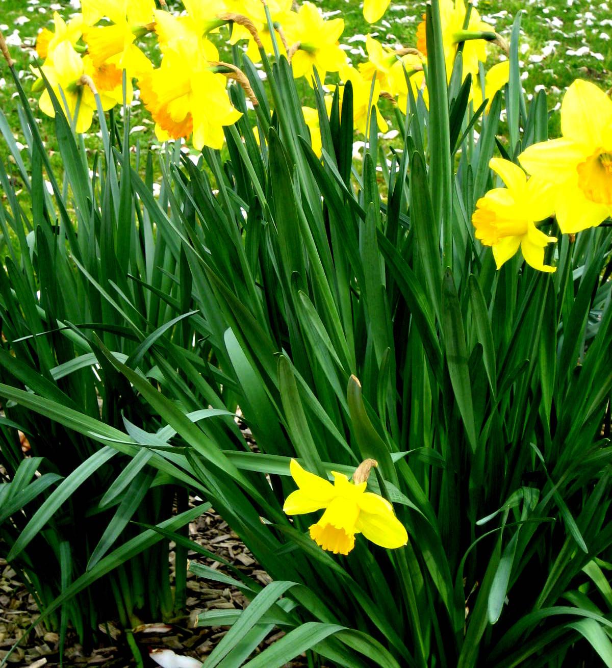 primavera (5)2
