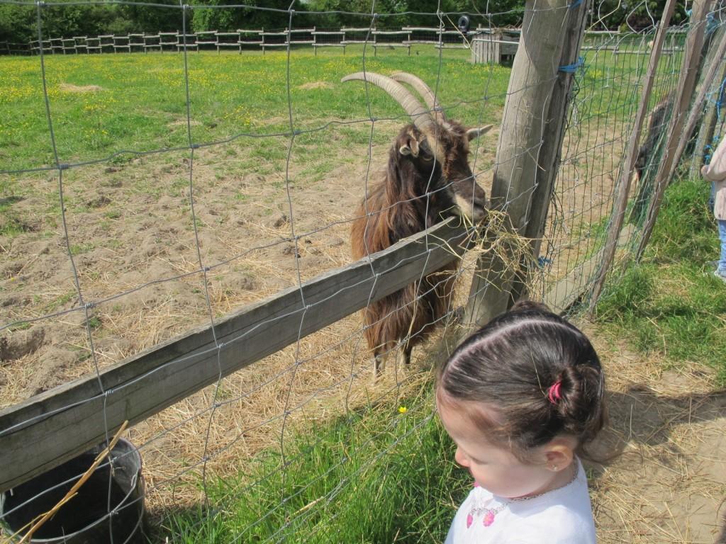 aprender español en Francia (actividad en la granja)